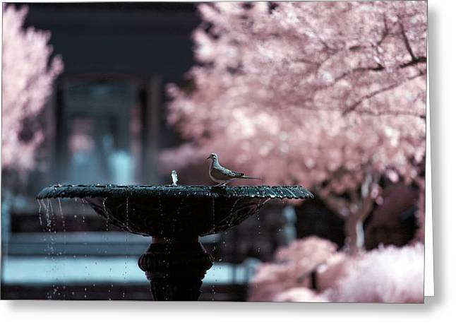 Greeting Card featuring the photograph Infrared Morning Dove by Brian Hale
