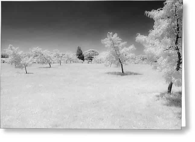 Infrared Peach Orchard Greeting Card