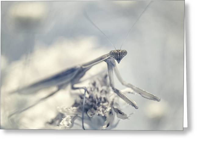 Greeting Card featuring the photograph Infrared Praying Mantis 2 by Brian Hale