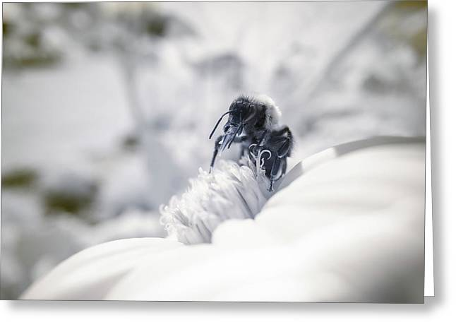 Greeting Card featuring the photograph Infrared Proboscis 3 by Brian Hale