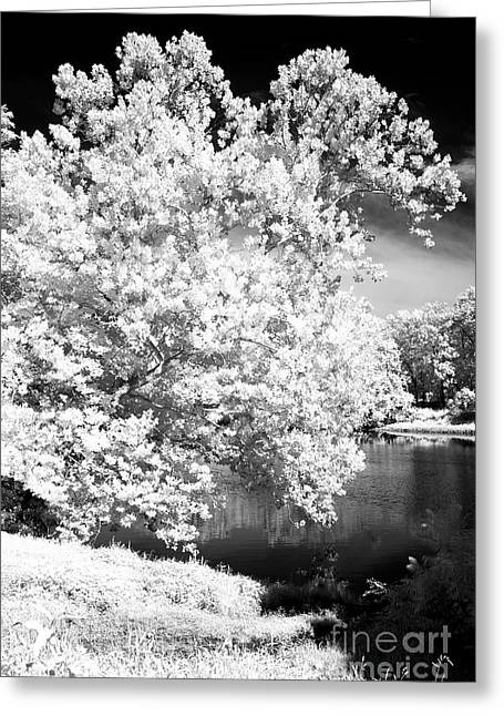 Infrared River Tree Greeting Card by John Rizzuto