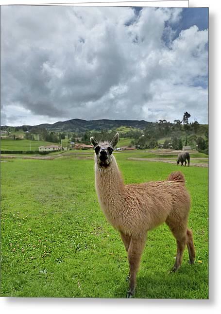 Ingapirca Incan Ruins 103 Greeting Card