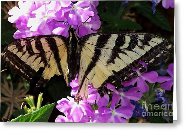 Injured Swallowtail Greeting Card by Erica Hanel