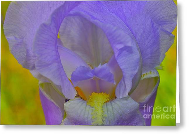 Inner Beauty Greeting Card by Alice Mainville