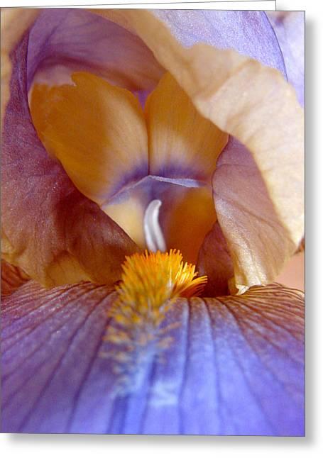 Inner Iris Series, Yellow Purple Greeting Card
