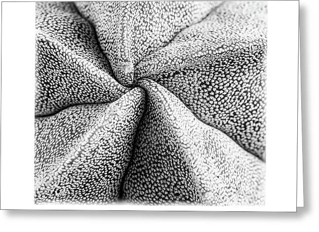 Greeting Card featuring the photograph Inner Plant Details by Michalakis Ppalis