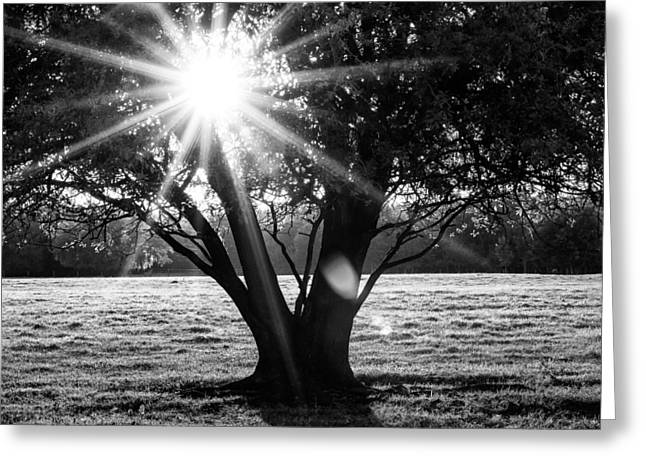 Innerlight- Black And White Greeting Card