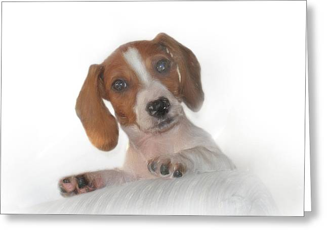 Greeting Card featuring the photograph Inquisitive Dachshund by David and Carol Kelly