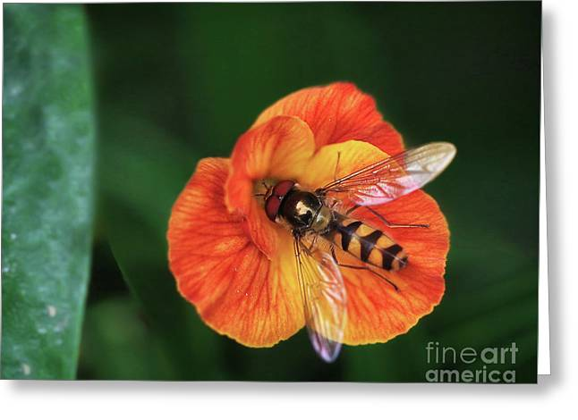 Insect On Vibrant Flower Greeting Card by Stephan Grixti