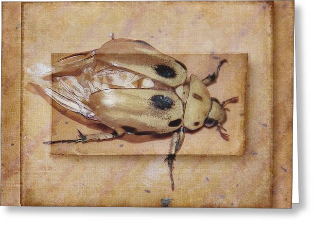 Insect On Wooden Board Greeting Card