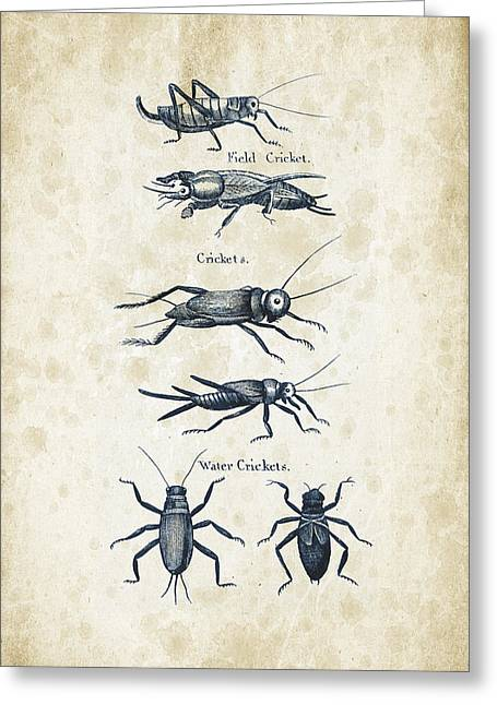 Insects - 1792 - 06 Greeting Card by Aged Pixel