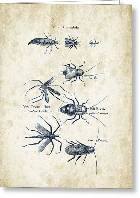Insects - 1792 - 10 Greeting Card by Aged Pixel