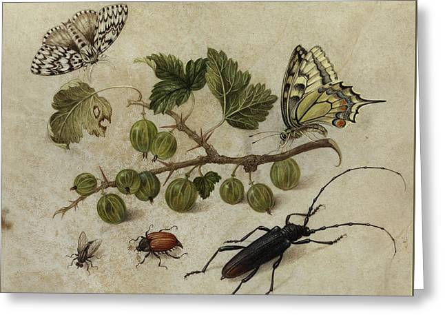 Insects And Butterfly Greeting Card