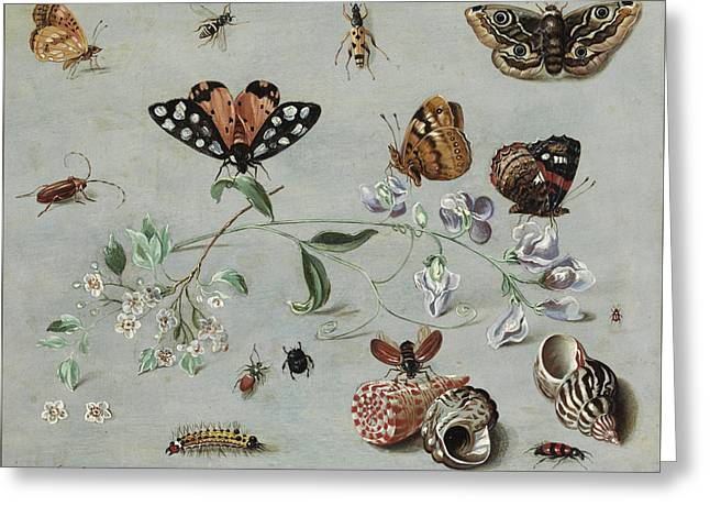 Insects, Butterflies And Clams Greeting Card