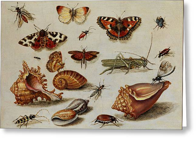 Insects, Shells And Butterflies Greeting Card