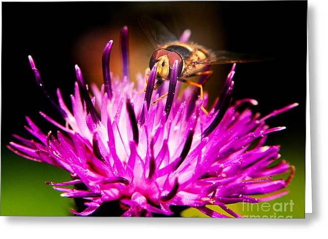 Insects Up Close Greeting Card by Chris Smith