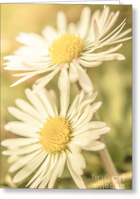 Inseparable  Greeting Card by Jorgo Photography - Wall Art Gallery
