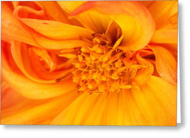 Inside A Flower Greeting Card