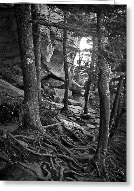 Inside Grandfather Mountain Greeting Card