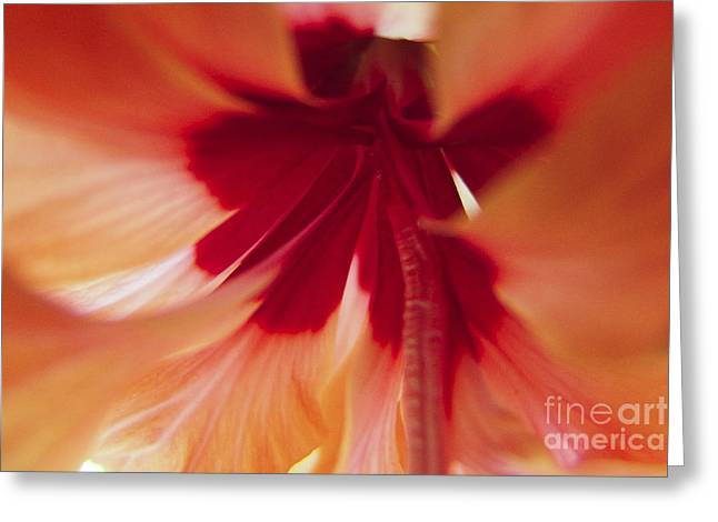 Inside Hibiscus Greeting Card
