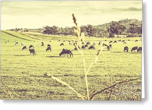 Instagram Styled Australian Farmyard Greeting Card by Jorgo Photography - Wall Art Gallery
