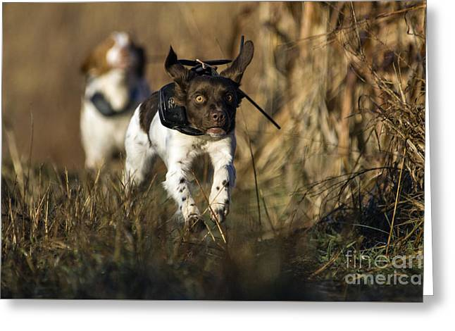 Intensity - D009789 Greeting Card by Daniel Dempster