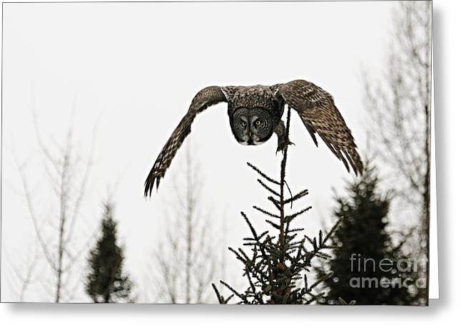 Greeting Card featuring the photograph Intent On His Prey by Larry Ricker