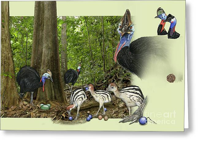 Zoo Nature Interpretation Panel Cassowaries Blue Quandong Greeting Card
