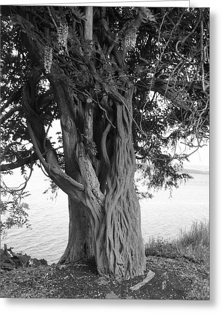 Intertwined For Life Black And White Greeting Card by Jennifer Compton