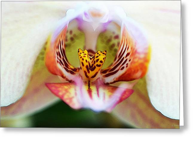 Intimate Orchid 1 By Sharon Cummings Greeting Card by Sharon Cummings