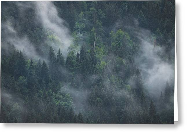 Into Deep Forest Greeting Card