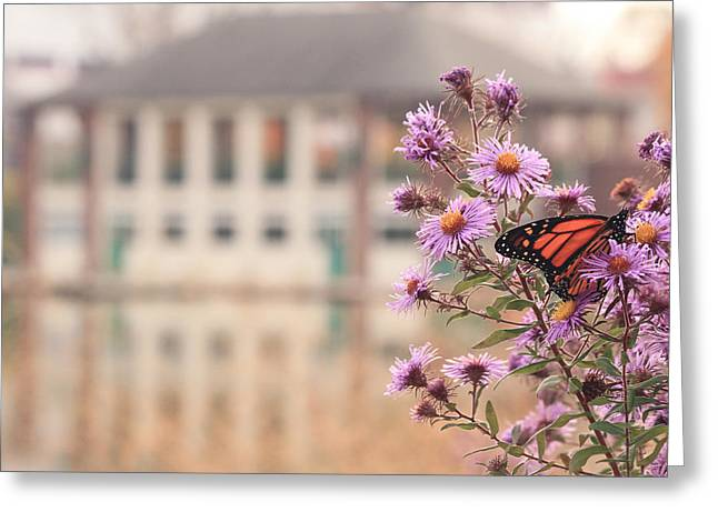 Into The Asters Greeting Card