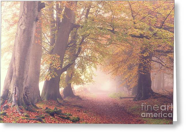 Into The Autumn Greeting Card by Tim Gainey