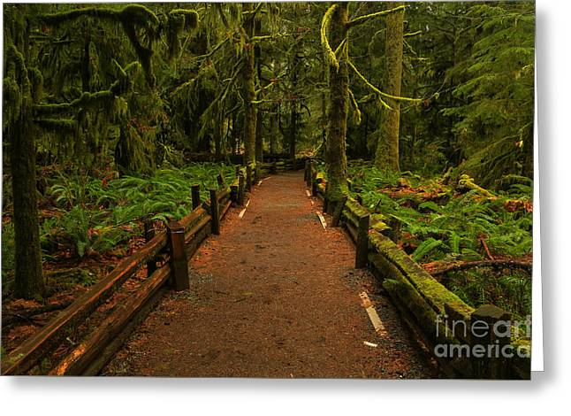 Into The Canadian Rainforest Greeting Card by Adam Jewell