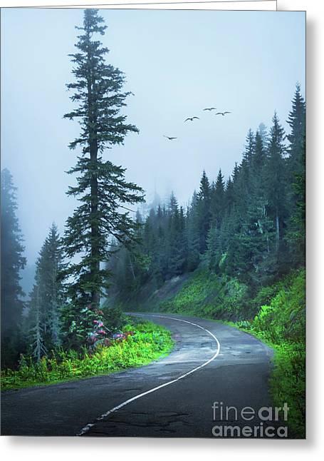 Into The Fog Greeting Card by Svetlana Sewell