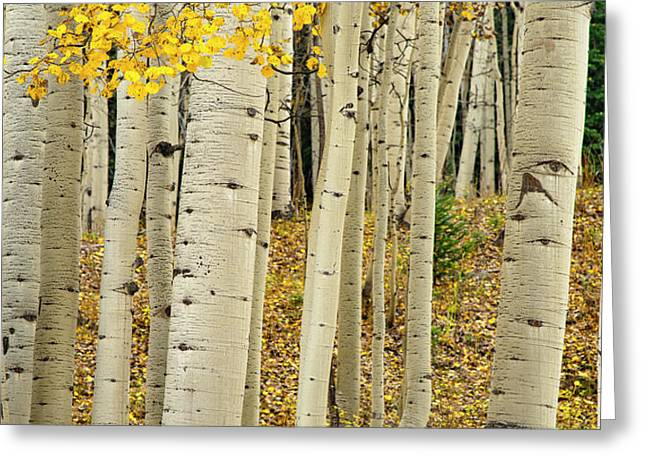 Greeting Card featuring the photograph Into The Forest by Gary Lengyel