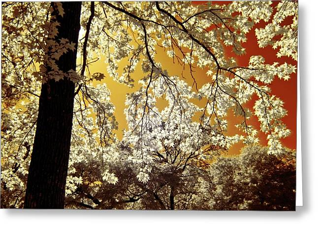 Greeting Card featuring the photograph Into The Golden Sun by Linda Unger