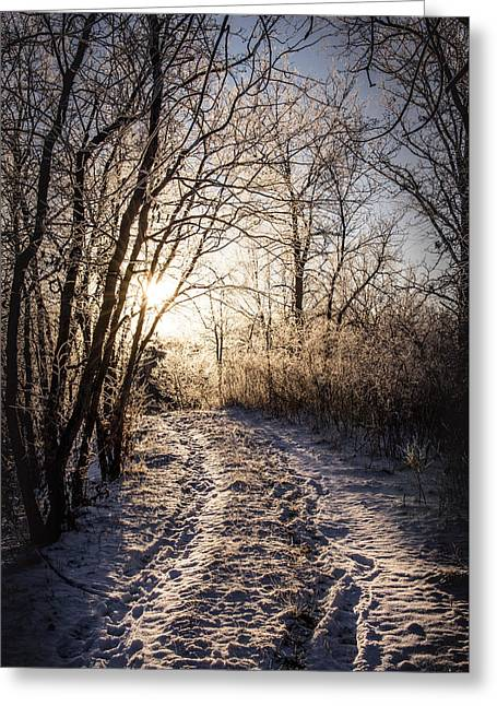 Into The Light Greeting Card by Annette Berglund