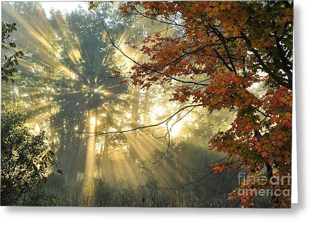 Into The Light Greeting Card by Terri Gostola