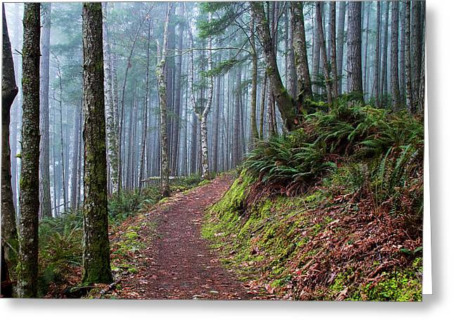 Into The Misty Forest Greeting Card