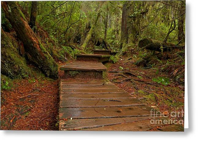 Into The Rainforest Greeting Card by Adam Jewell