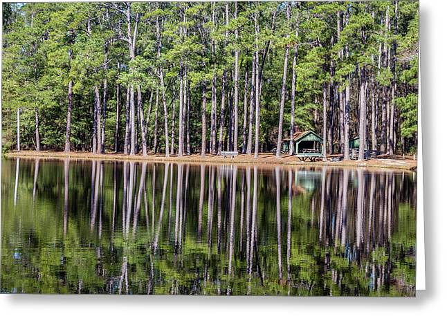 Into The Sc Woods Greeting Card by Menachem Ganon