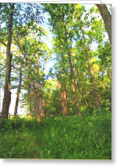 Into The Summer Forest Greeting Card by Dan Sproul