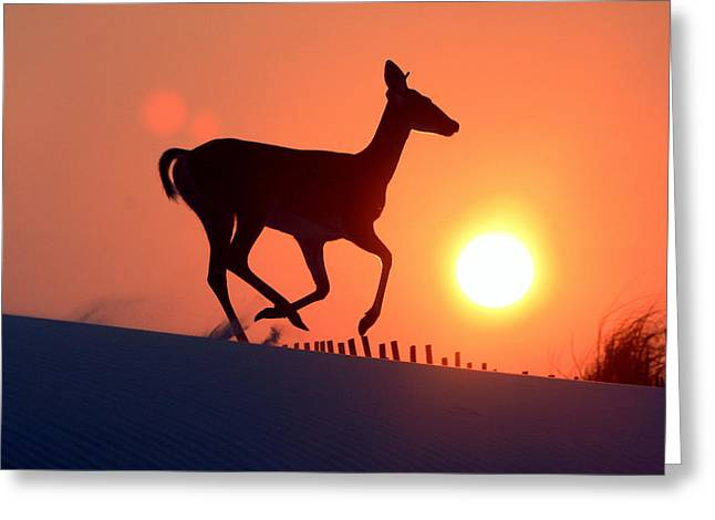 Into The Sunset Greeting Card by Scott Mahon
