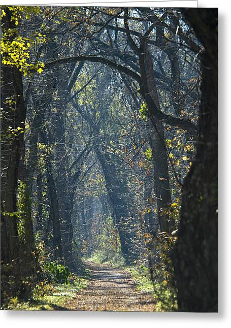 Into The Wood Greeting Card