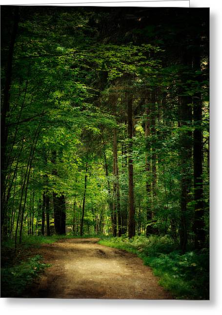 Into The Woods Greeting Card by Lisa Russo