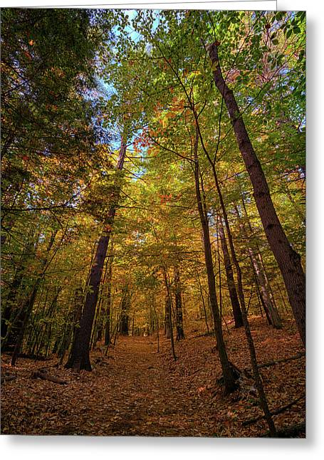 Into Vaughan Woods Greeting Card