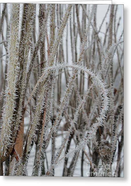 Intriguing Winter Frost Greeting Card
