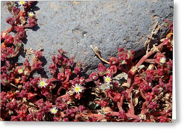 Invasion - Common Ice Plant Greeting Card
