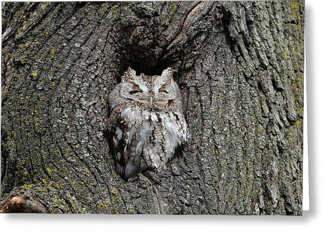 Invincible Screech Owl Greeting Card